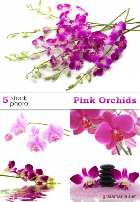 ��������� ������� - Pink Orchids