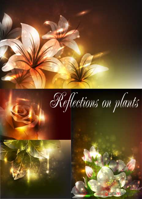 Reflections on plants