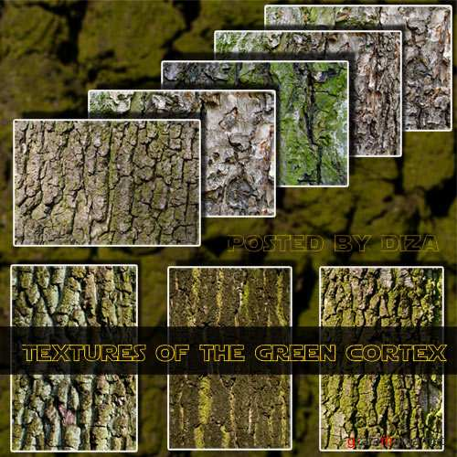 Textures of the green cortex - �������� ������� ���� ��������