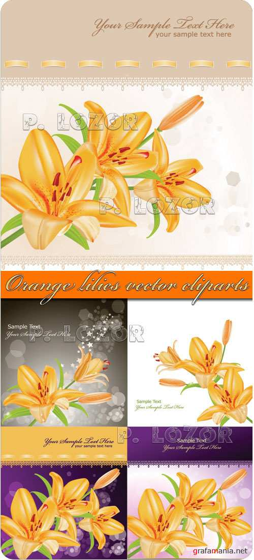 Orange lilies vector cliparts
