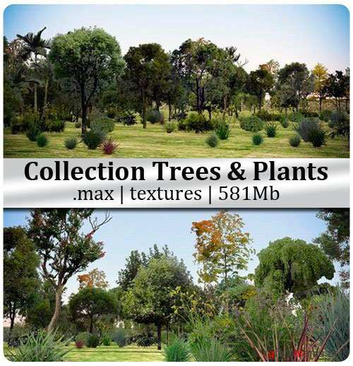 3D Models Collection Trees & Plants