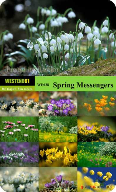WE038  Spring Messengers