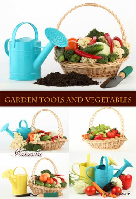 Garden tools and vegetables - Stock Photos