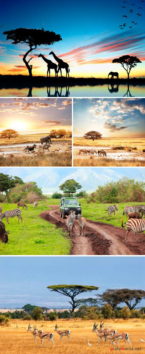 Stock Photo - Safari in Africa