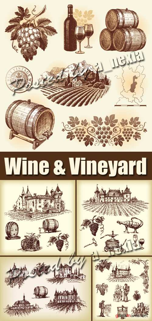 Wine & Vineyard Vector