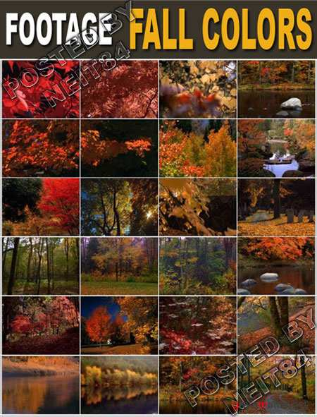 Footage Nature Fall Colors