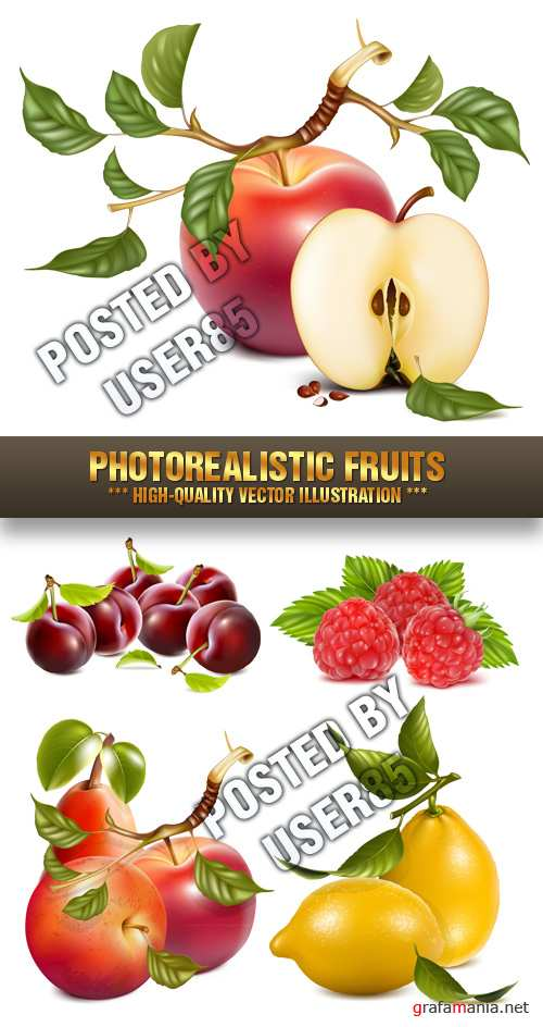 Stock Vector - Photorealistic Fruits