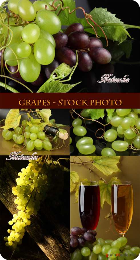 Grapes - Stock Photo 2