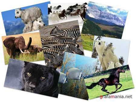 45 Eximious Animals HQ Wallpapers
