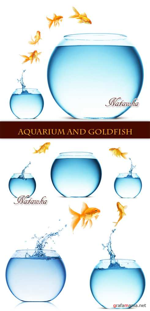 Aquarium and goldfish - Stock Photo