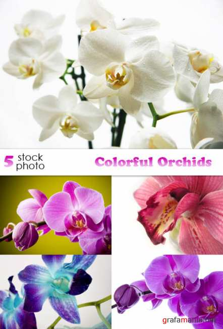 ��������� ������� - Colourful Orchids