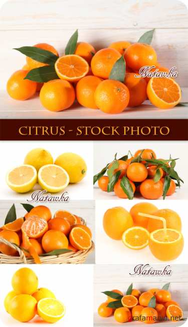 Citrus - Stock Photo