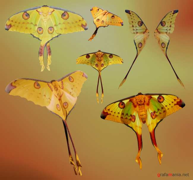 �� �������� �� ������� / Butterflies by Jinxmim (PSD-��������)