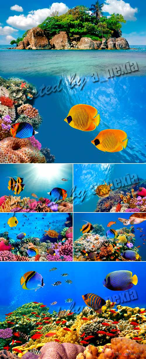 Stock Photo - Underwater World 2
