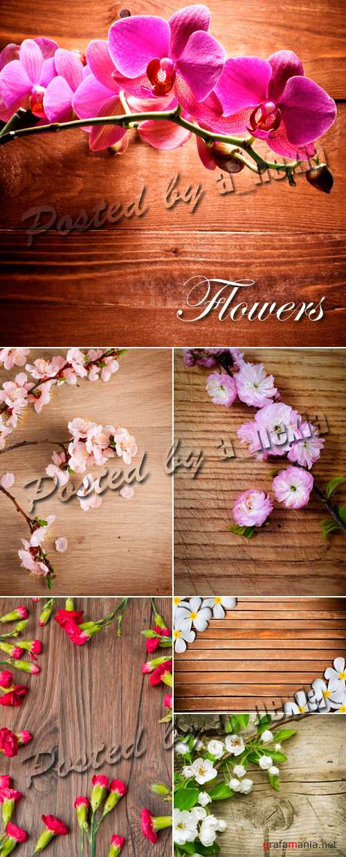Stock Photo - Flowers on Wooden Backgrounds