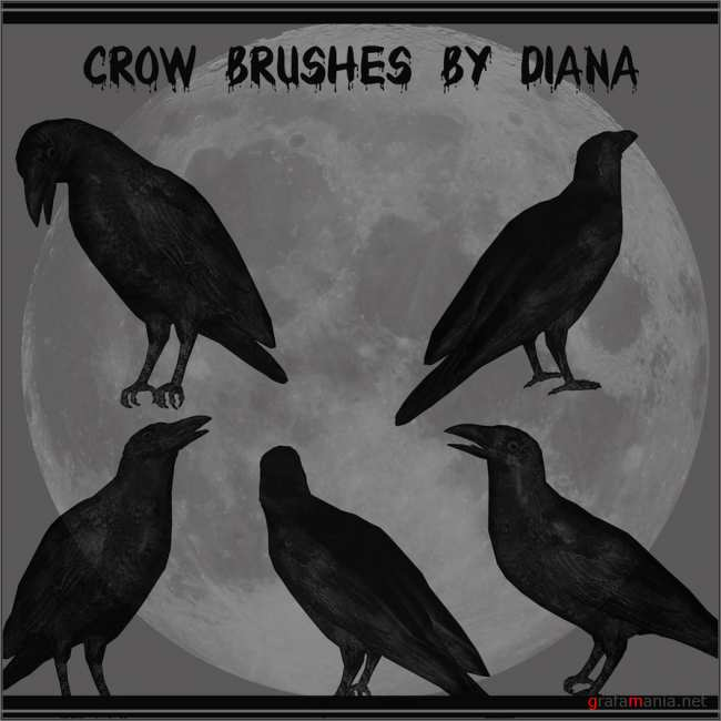 Кисти Вороны / Crow Brushes