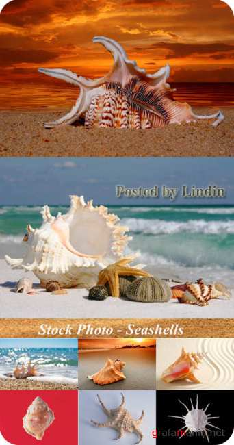 Stock Photo - Seashells