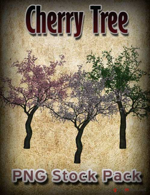 Cherry Tree PNG Stock Pack