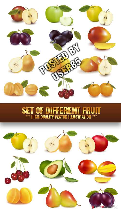 Stock Vector - Set of Different Fruit