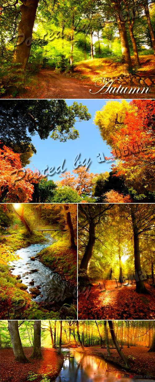 Stock Photo - Amazing Autumn Forest