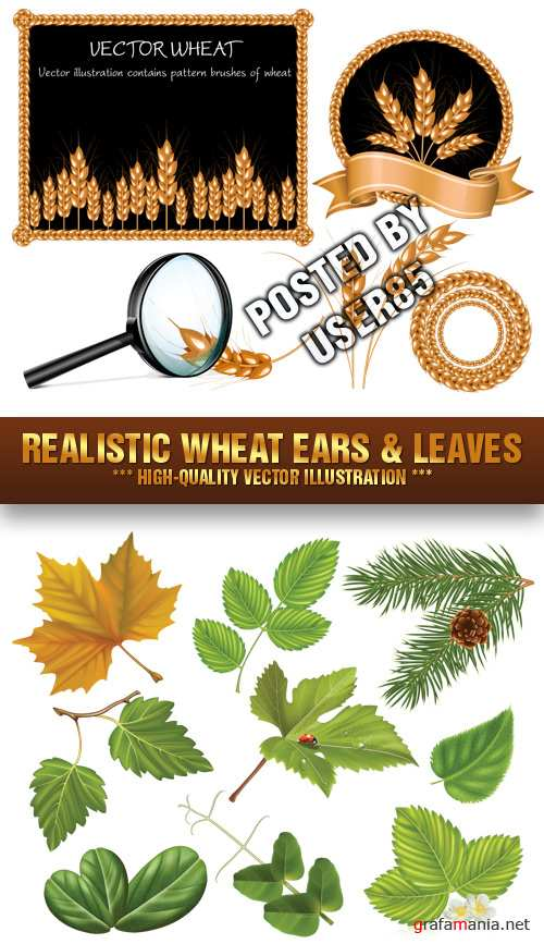 Stock Vector - Realistic Wheat Ears & Leaves
