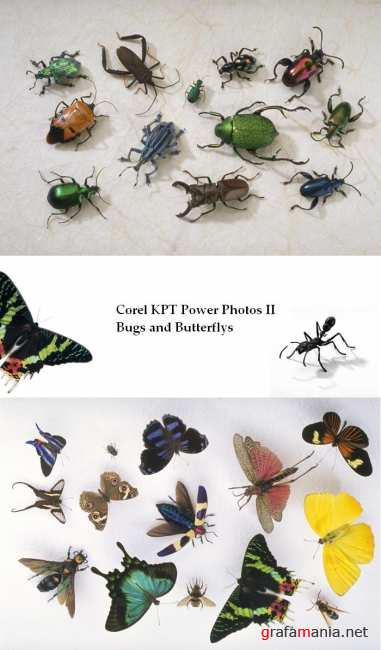 ������� ���� � ������� / Corel KPT Power Photos II Bugs and Butterflys