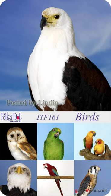 Polka Dot Images  ITF161 - Birds