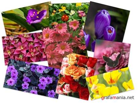 45 Wonderful Colorful Flowers HQ Wallpapers