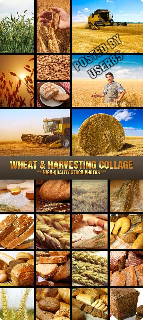 Stock Photo - Wheat & Harvesting Collage