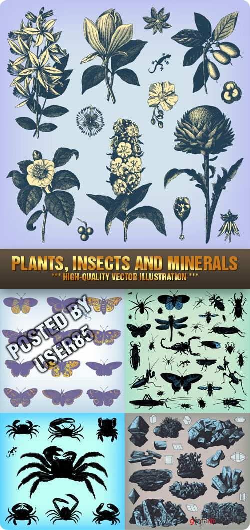 Stock Vector - Plants, Insects and Minerals