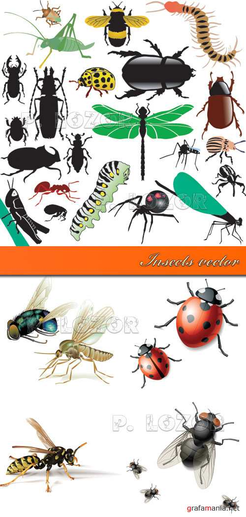 Insects vector - Насекомые