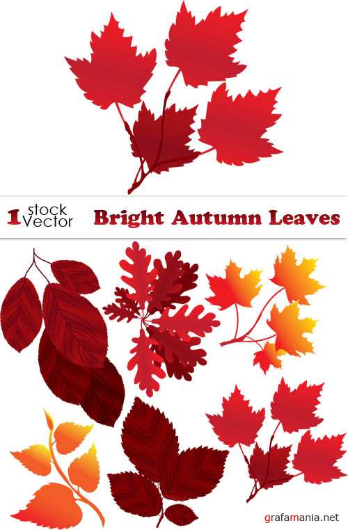 Bright Autumn Leaves Vector
