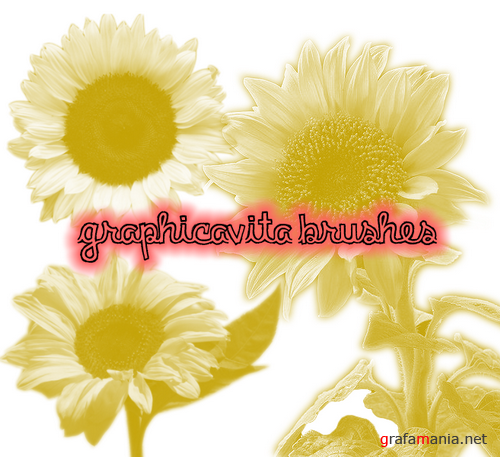 Flowers Brushes by graphicavita | Кисти - цветы
