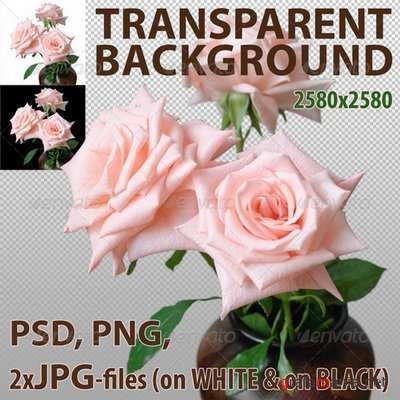 GraphicRiver - Pink Roses Isolated - 5422638