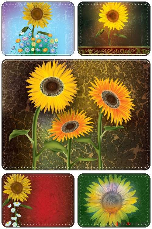 Abstract sunflower background - Vectors