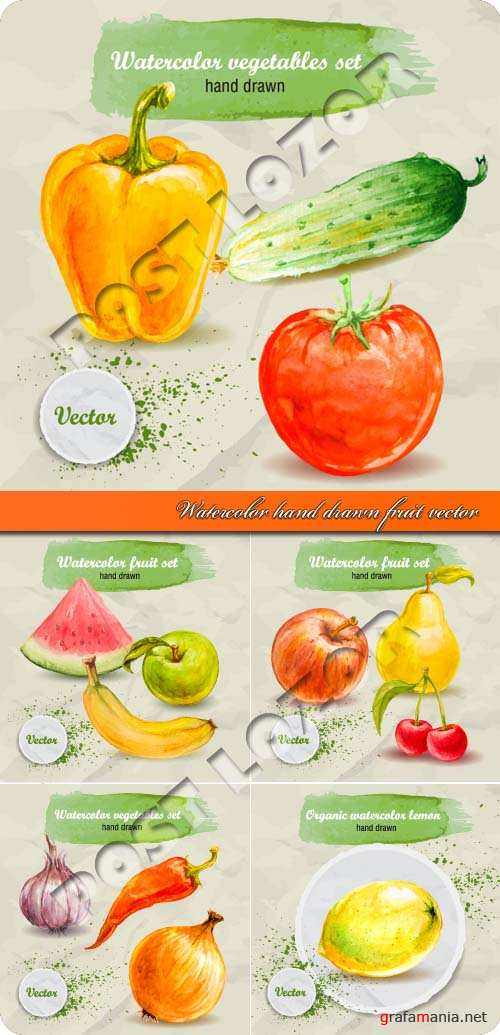Watercolor hand drawn fruit and vegetable vector