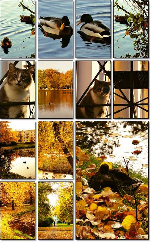 Golden Autumn - Stock photo
