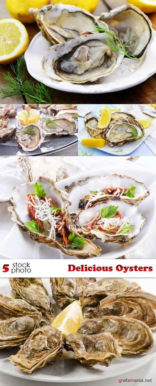 Photos - Delicious Oysters