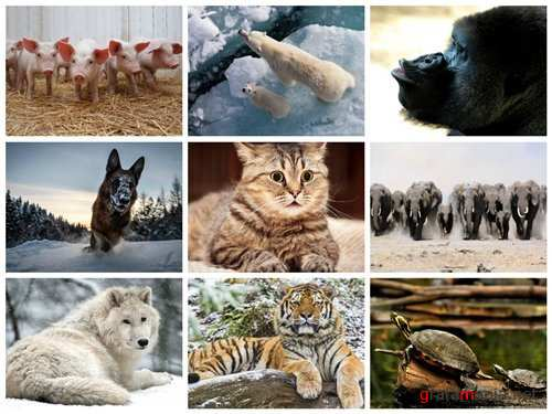 70 Wallpapers with Animals Set 2