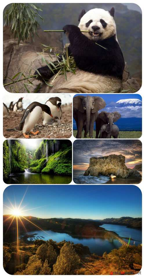 Wallpapers - Nature and animals 22