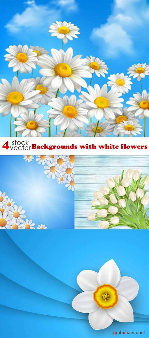 Vectors - Backgrounds with white flowers