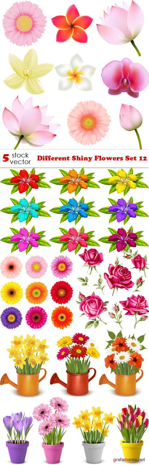 Vectors - Different Shiny Flowers Set 12