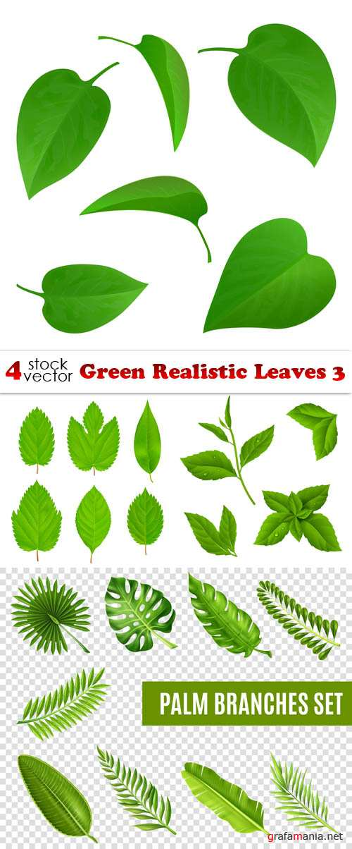 Vectors - Green Realistic Leaves 3
