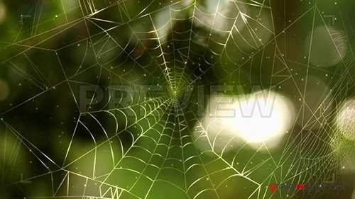 MA - Spider Web Background Pack 86655