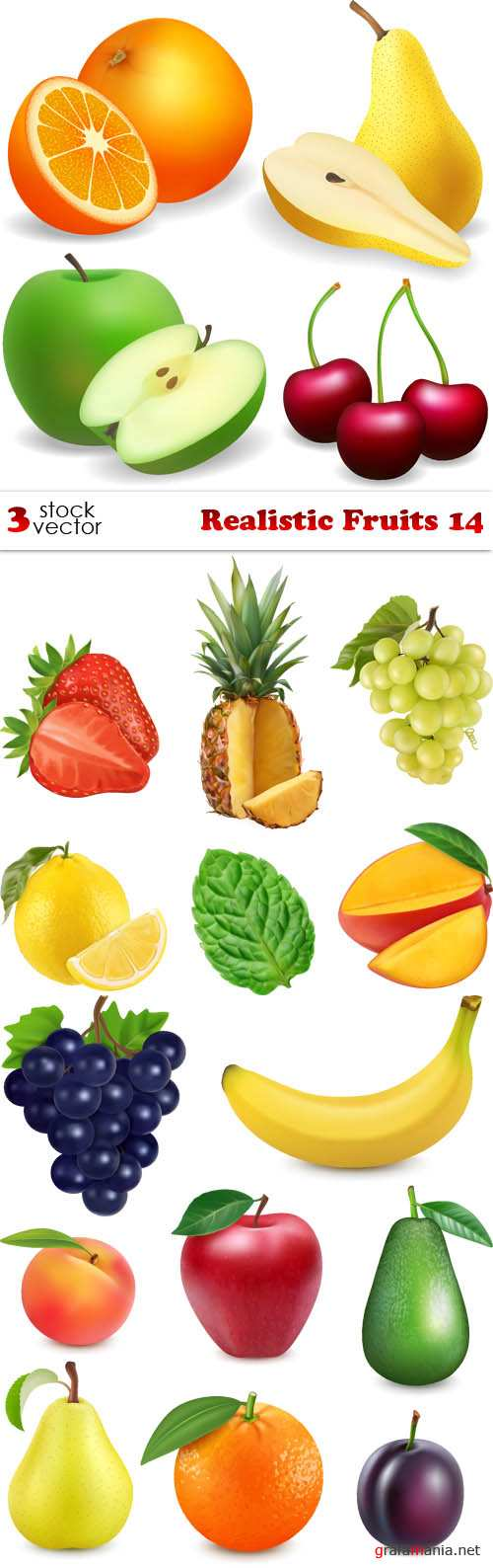 Vectors - Realistic Fruits 14