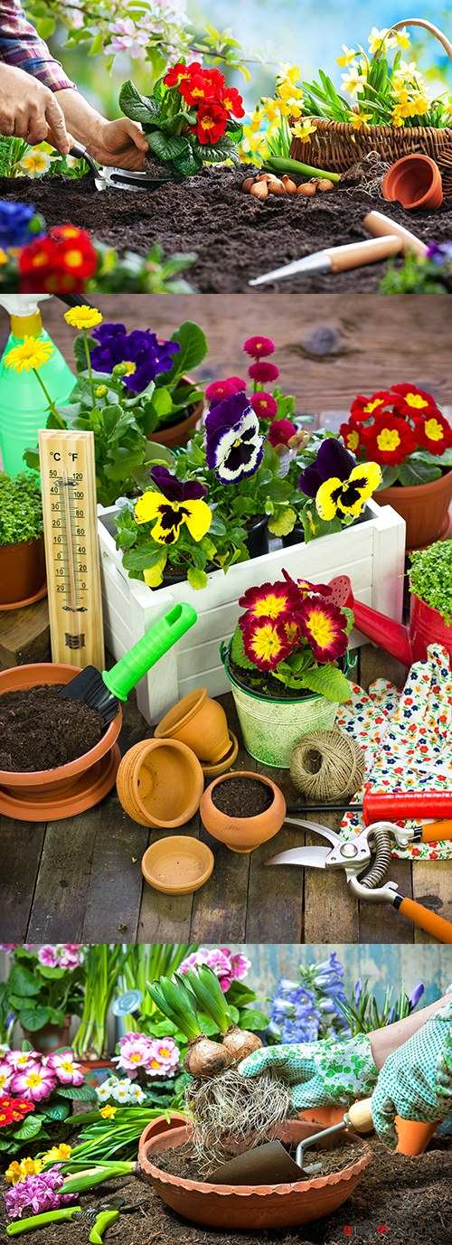 Spring gardening of agriculture planting of flowers