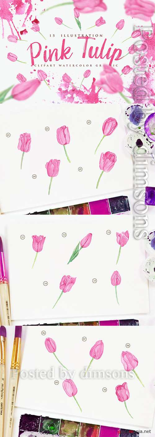 15 Watercolor Pink Tulip Flower Illustration