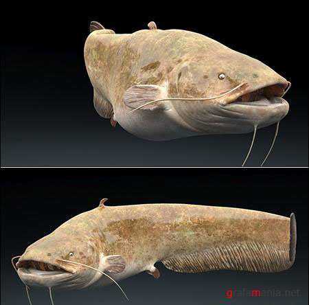 TurboSquid Catfish Rigged