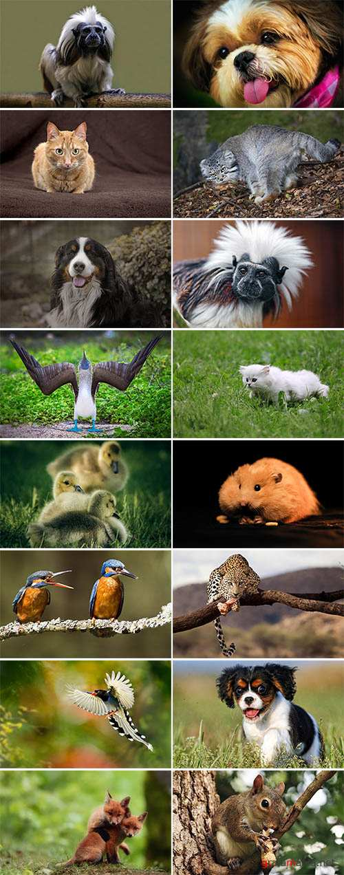 Wallpapers Animal World p.4