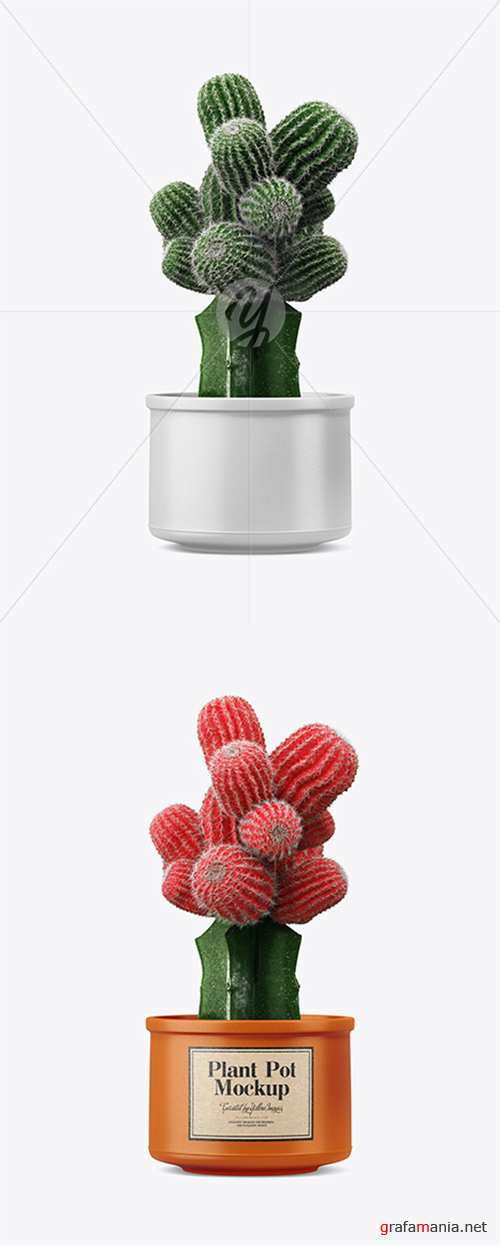 Cactus in Ceramic Pot Mockup 35072 TIF